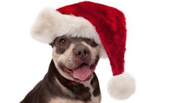 These Shelter Pets Wish for a Home for the Holidays