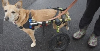 Annie's Wheelchair Keeps Her on the Trails with Her Family!