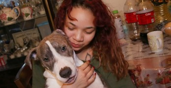 """I think he saved my life…"" Hero Pit Bull Prevents Sexual Assault on Teen"
