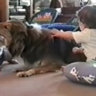 "Kisses, Cuddles, Ka-Bonks! A Great ""Dogs & Babies"" Video Compilation!"