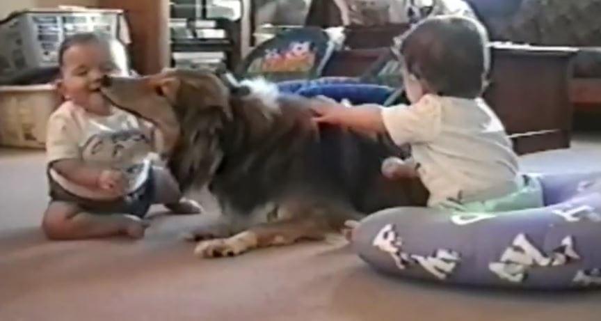 "Kisses, Cuddles, Ka-Bonks! A Great ""Dogs & Babies"" Video Compilation!"