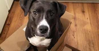 "TOO CUTE! These Dogs Know the ""Real"" Meaning of Boxing Day"
