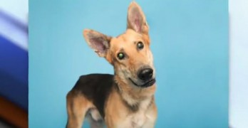 #314 Campaign Saves Bryan, the Only Remaining Dog at an AZ Shelter