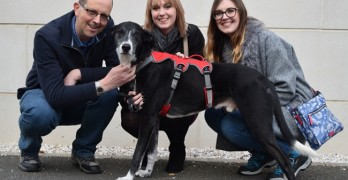 Greyhound of 1000 Days Gets Forever Home Thanks to TV Program