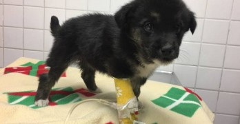Puppy Clinging to Life After Being Found Nearly Frozen to Death