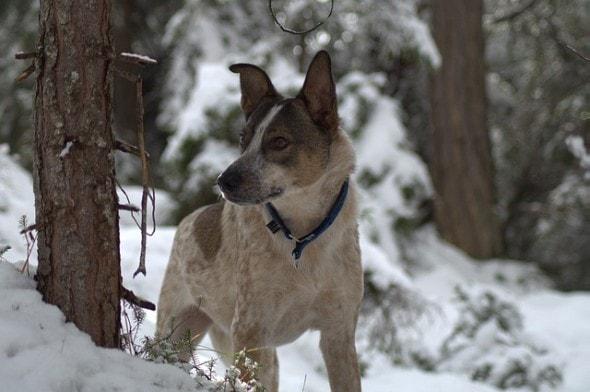 dog-1819934_640