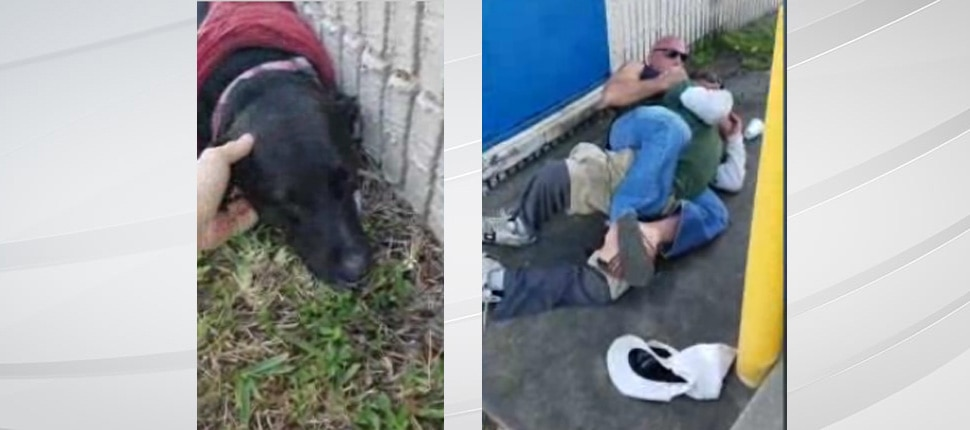 Abuser Gets the Smackdown When Martial Arts Expert Steps in to Protect Terrified Dog!