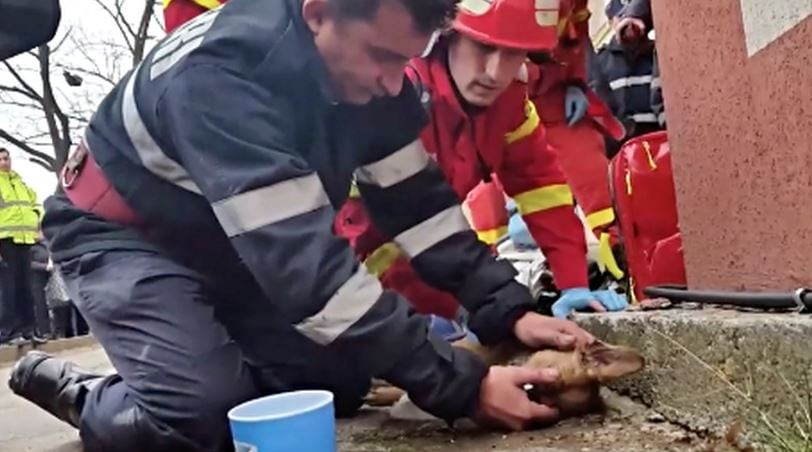 Watch: Hero Firefighter Saves Dog's Life with CPR