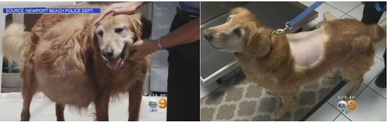PUPDATE! Woman Who Abandoned Henry, Dog with 42-Pound Tumor, Charged with Animal Cruelty