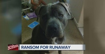 Scammers Demand Cash for Family's Missing Dog
