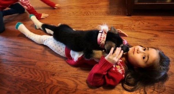 Kylee Grace Payne, 7, bonds with the family's new puppy, Jolly. Photo: Jim Weber/The Commercial Appeal