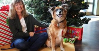 Saved From Meat Trade, Cinderella Needs Her Fairytale Ending for Christmas