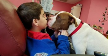 Shelter Pit Gives Comfort & Cuddles to Cancer Patients