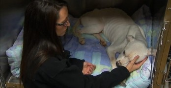 This dog nearly starved to death. Now he will heal and find the home he deserves.