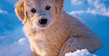 Adorable Puppy Overload Alert – Take Your Chances Watching These Sweeties