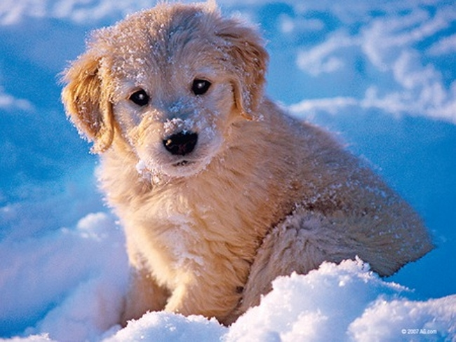Adorable puppy overload alert take your chances watching these puppies playing puppies giving kisses puppies running around in the snow puppies are the perfect way to start out your day and these little guys at best voltagebd Choice Image