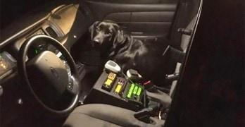 Lost Dog Sneaks into a Police Car and Gets a Ride Home