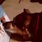 The Season of GETTING: Dog Grumbles After Getting only ONE Treat from Advent Calendar