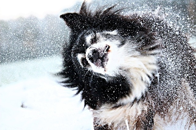 Winter Storms Mean Pet Safety Practices Absolute Must