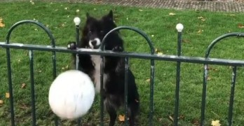 Dog Tricks Passersby into Playing Fetch!