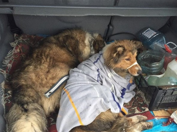 The dogs were taken to a shelter and later reunited with their owners.
