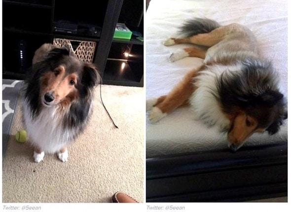 1-10-17-college-student-smuggles-dog-in-dorm1