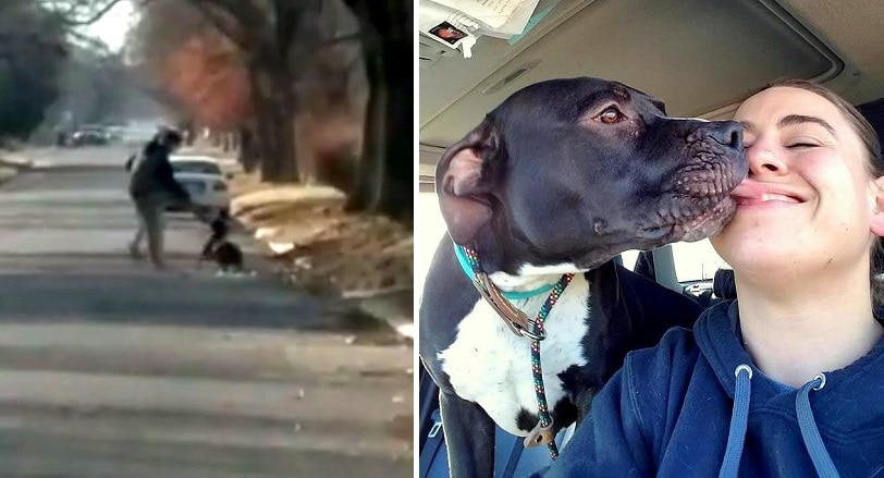 Woman Who Caught Teen Abusing His Dog Is Now Training Him How to Treat Dogs Properly