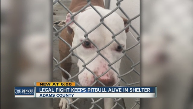 Woman Brings Federal Lawsuit Against the City She Lives in For Trying to Put Her Dog Down