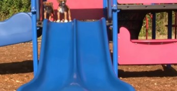 These Dogs Can't Get Enough Slide!