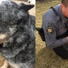 Blind Dog Gets Adopted by the Animal Control Officer That Rescued Him