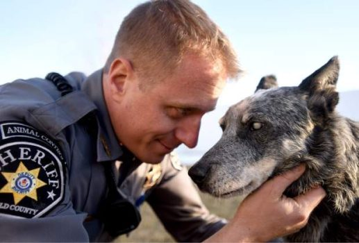 1.12.17 - officer adopts blind dog4