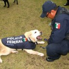 After Long Legal Battle, Mexico FINALLY Agrees to Stop Putting K9s Down Upon Retirement