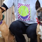 Dexter and Thumper Are a Bonded Pair That Have Been Waiting Over 4 Years for a Forever Family