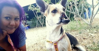Mutilated Dog Who Was Nearly Dinner in Thailand Will Soon Have a Home in the US
