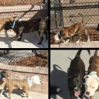 Neglected Pair of Dogs Are Rescued By Animal Control and Find a Deep Kinship in Shelter
