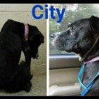 Dog Called City Can Now Search for a New Human After Case Against Former Owner Finished