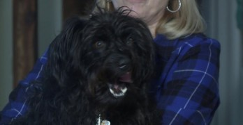 Dog Stuck In an Animal Trap for 18 Hours in an Ice Storm Survives to Tell the Tale