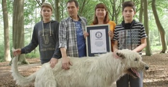 Guinness Book of World Records Crowns Dog With the Longest Tail