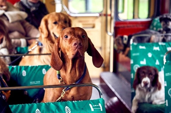 1.18.17 - London Launches World's First Bus Tour for Dogs3