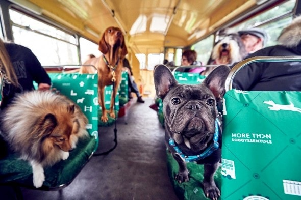 1.18.17 - London Launches World's First Bus Tour for Dogs4