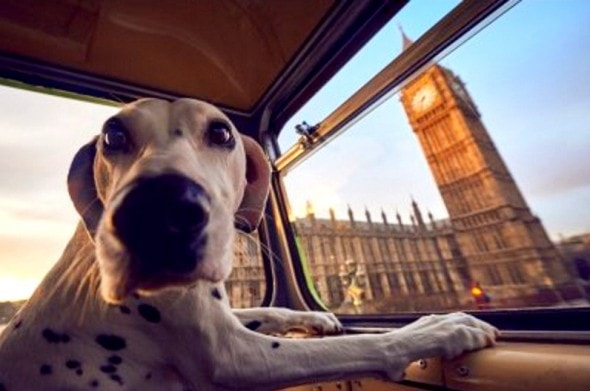 1.18.17 - London Launches World's First Bus Tour for Dogs5