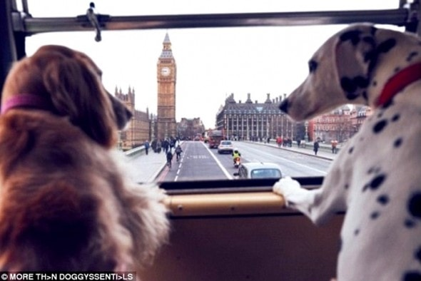 1.18.17 - London Launches World's First Bus Tour for Dogs6