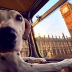 London Launches the World's First Bus Tour for Dogs