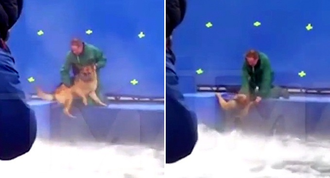 """A Dog's Purpose"" IS NOT to Be Thrown into the Water for a Dramatic Scene"