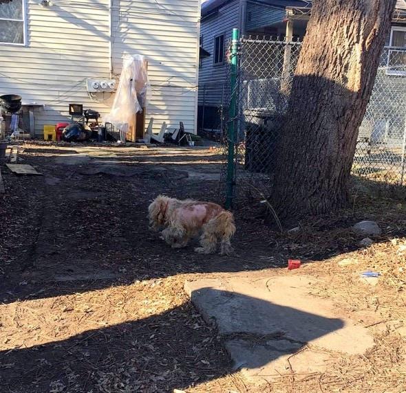 1-2-17-matted-frostbitten-dog-saved-by-a-good-samaritan1