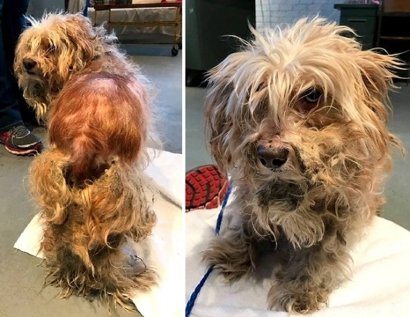 1-2-17-matted-frostbitten-dog-saved-by-a-good-samaritan2