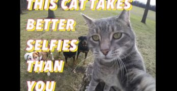 This Cat Takes Better Selfies With the Dogs Than You Do