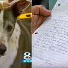 The Letter This Dog's Family Left at the Shelter Will Break Your Heart