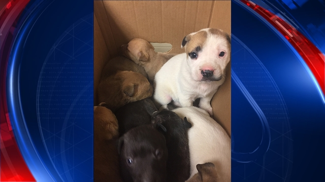 Woman Discovers Box Containing 19 Abandoned Puppies While on a Run in a Michigan Park