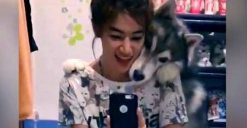 Hambone Husky Refuses to Let His Human Take a Selfie Without Him